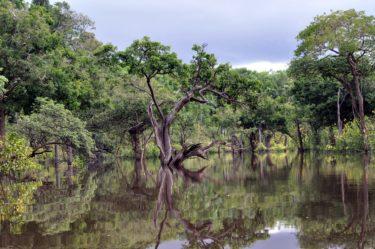 ブラジル・アマゾンのインディオ保護活動家、家族の前で殺害