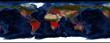 アフリカでも失われる熱帯雨林 ――森は、燃えているのではなく、燃やしている?