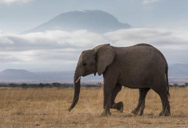 【前編】アフリカ旅行、おすすめはどこ? データから見えてくるアフリカ旅行の本当のところ